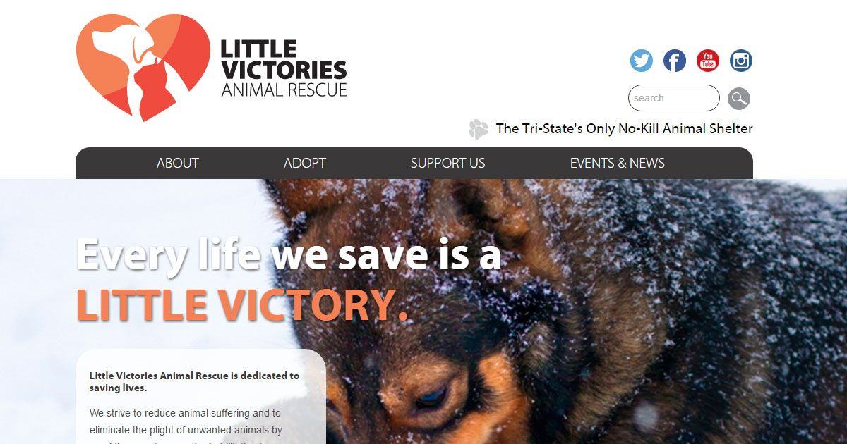 New 2016 Grantee Little Victories Animal Shelter The Grey Muzzle Organization S Grant Will Help Animal Shelter No Kill Animal Shelter Senior Dog