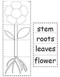 Image result for parts of plants worksheet | Iddi skool | Pinterest