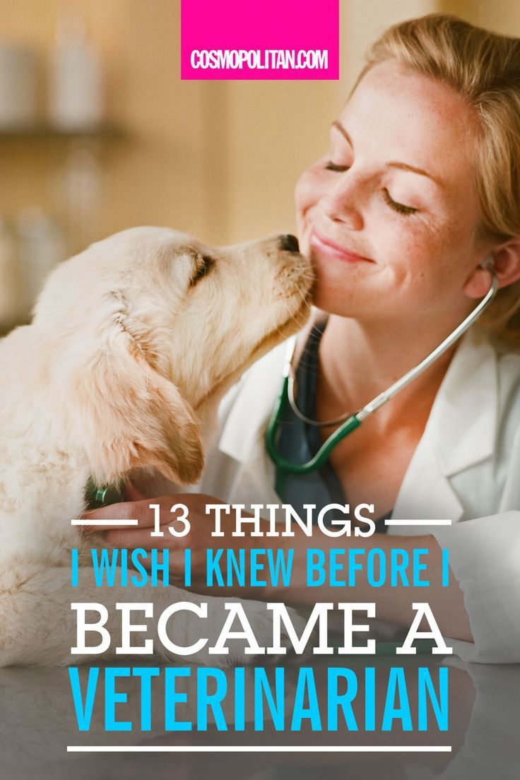 13 Things I Wish I Knew Before I Became a Veterinarian
