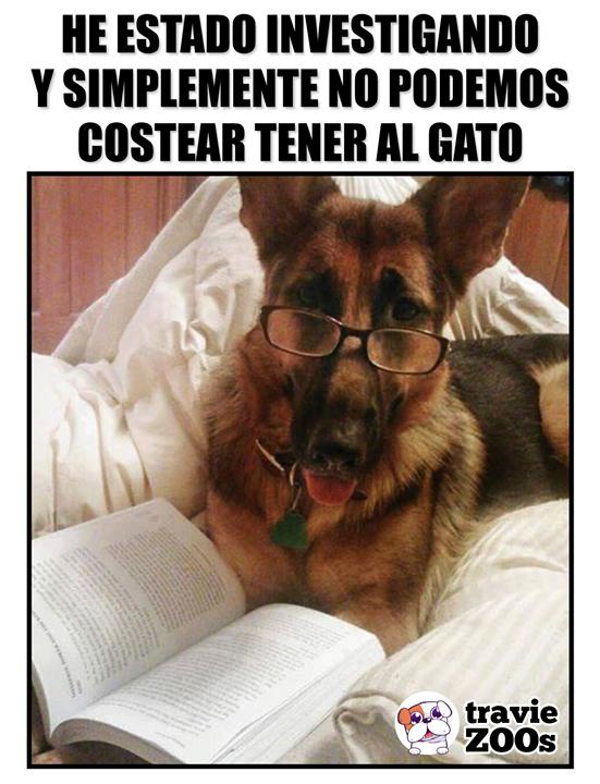 Que Listillo Solovino Perros Pastor Aleman Perros Graciosos Perros