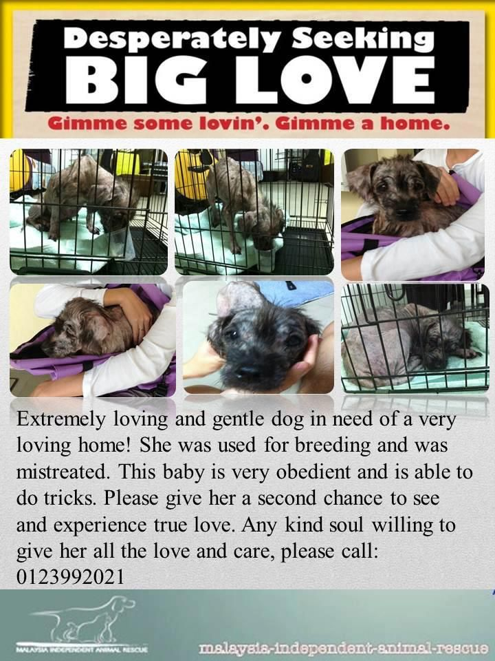 Please Adopt Sponsor Or Donate Http Www Facebook Com Pages