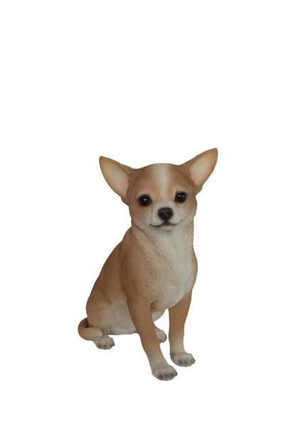 Superieur The Beloved Chihuahua Dog Is One Of The Smallest Breeds Of Dogs, Andu2026