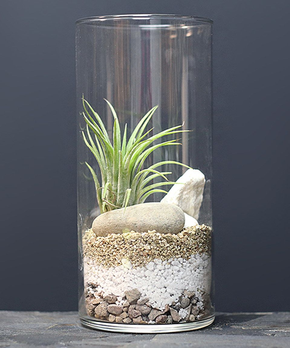 This cylinder vase air plant terrarium by makerskit is for Air vase