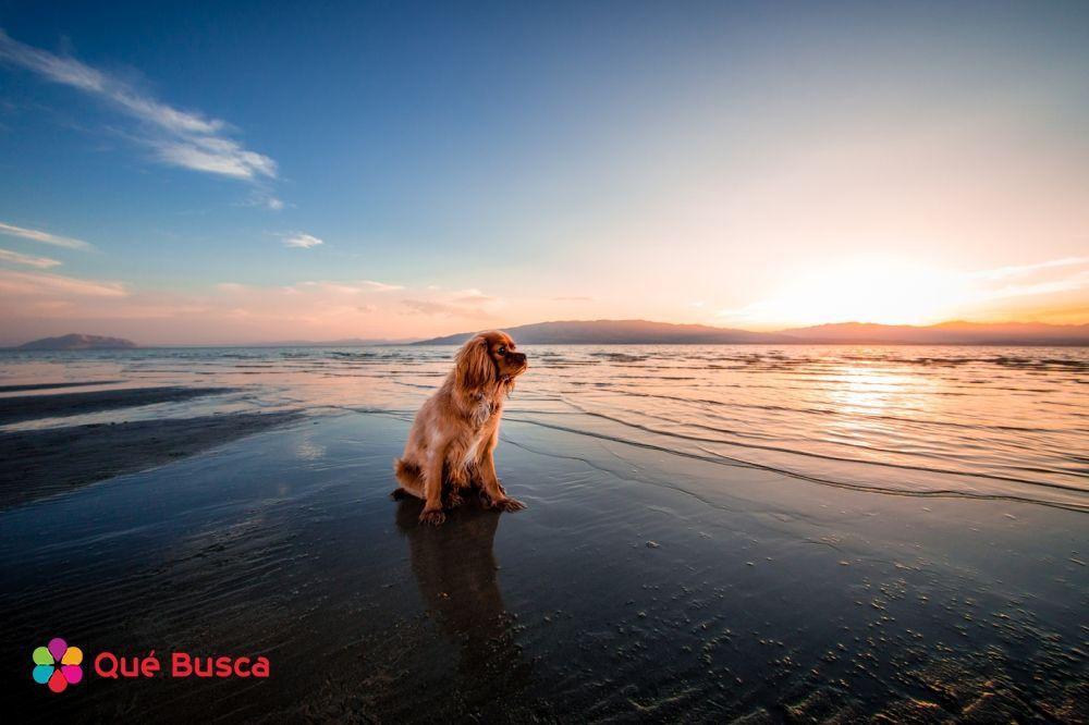 El perro y el paisaje más fotogénico.