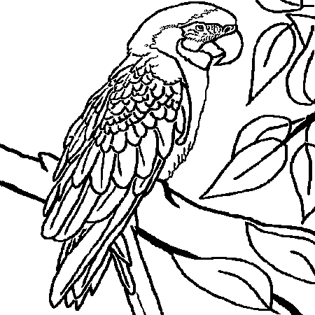 Dessin perroquet a colorier oiseaux pinterest dessin - Perroquet dessin ...