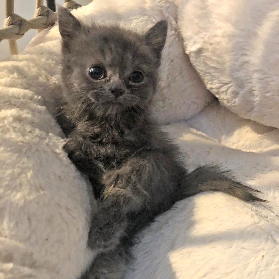 Woman Saves Kitten With Twisted Legs And Tiny Body When Others Have Given Up Love Meow Cute Cats And Dogs Cute Cats Baby Cats