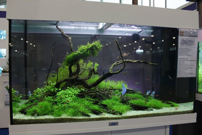 Cb600 Planted Tank 120l Nature Aquarium Aquascape Aquascape Design