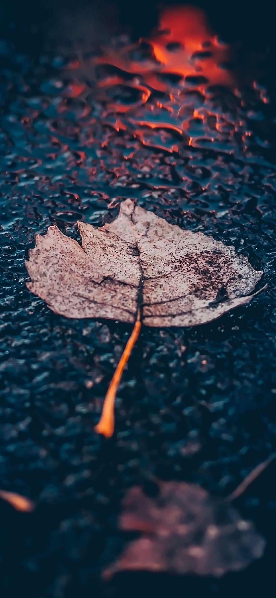 Leaf On Pavement Download At Http Www Myfavwallpaper Com 2018 04 Leaf On Pavement Html Iphonewallpaper Phonewall Fotografi Seni Seni Patung Latar Belakang