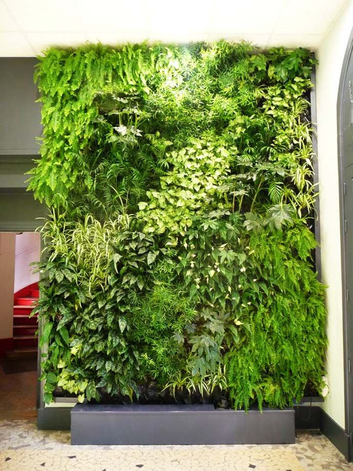 Vertical garden a real sensation of being in the heart of for Vertical green wall