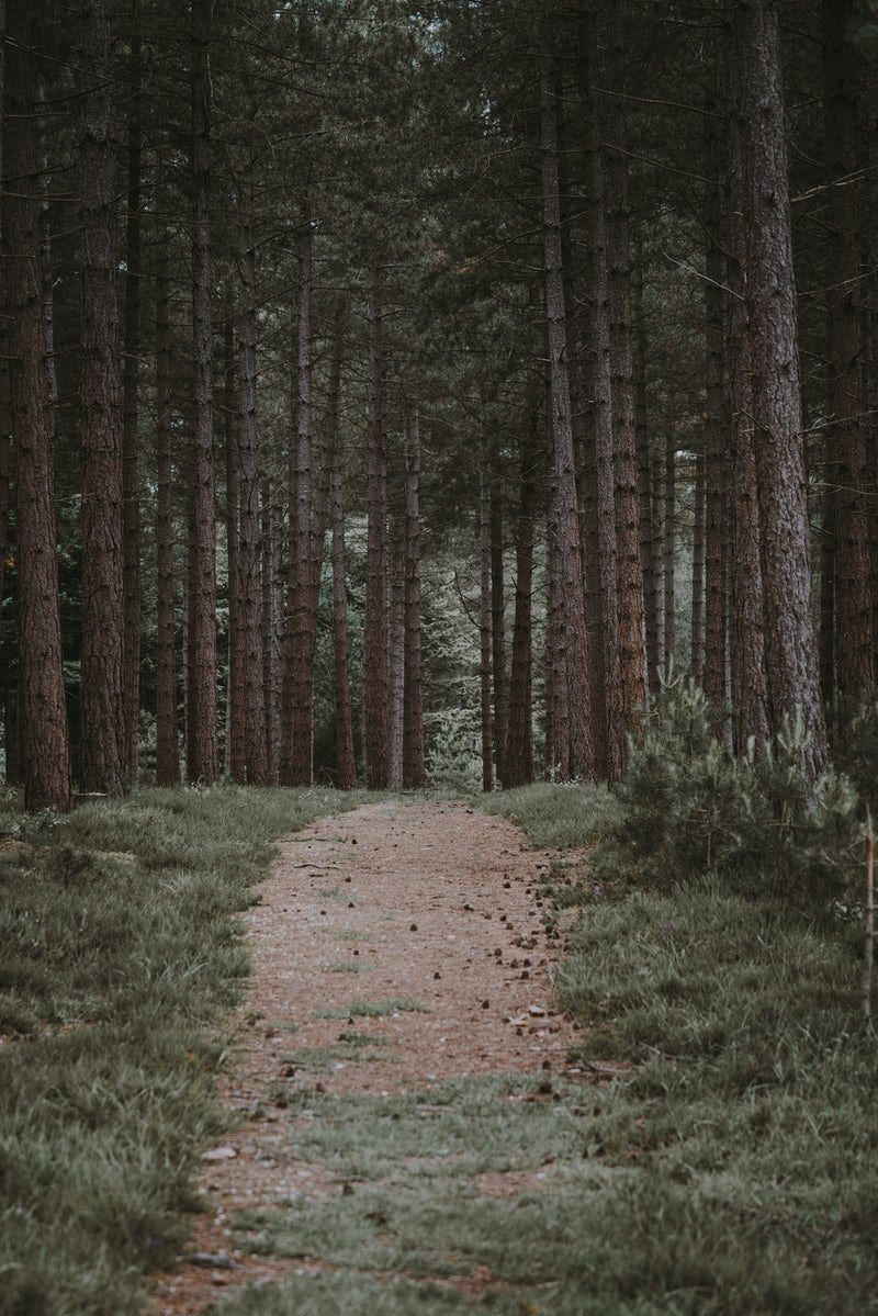 Landscape Photography Of Forest Trail Forest Wallpaper Forest Pictures Forest Trail