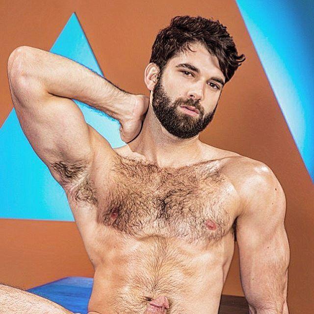 gay bear licks pits