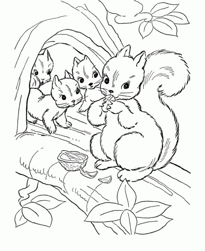 Squirrel Family Live On A Tree Coloring Pages Animal Rhpinterest: Coloring Pages Of Animals That Live In Trees At Baymontmadison.com