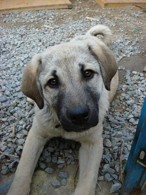 Pin By Laura Wright On Looking For Babies 2 14 17 Pet Adoption