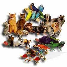 Η   ΕΦΗΜΕΡΙΔΑ   ΤΩΝ    ΣΚΥΛΩΝ: Συμβιώνω με τα ζώα γύρω μου...