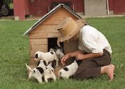 Amish boy and his puppies