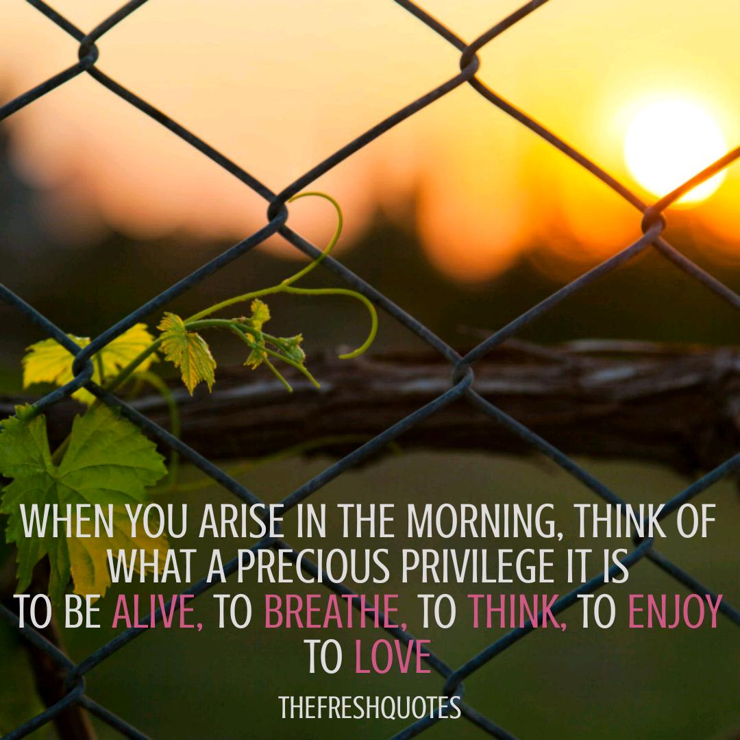 Beautiful Inspirational Good Morning Quotes   Good morning