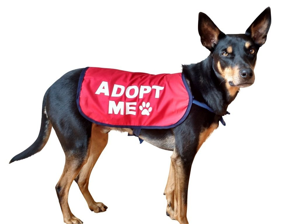 Adopt Me Dog Jacket Vest Size M L Xl Rescue Dogs
