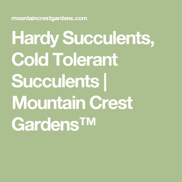 Hardy Succulents, Cold Tolerant Succulents   Mountain Crest Gardens™
