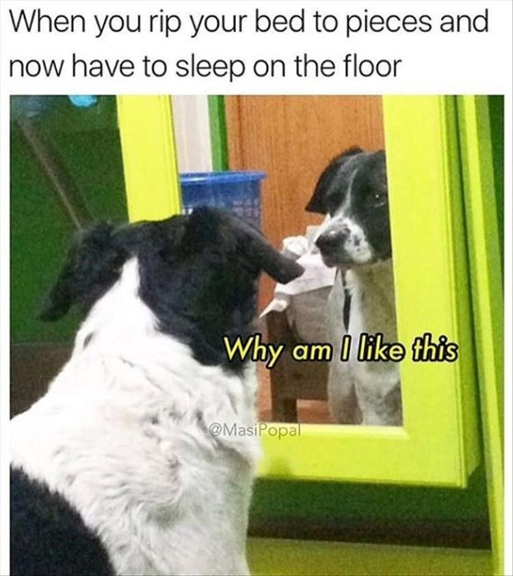 Just 17 Doggo Memes To Remind You How Great They Are Animal Memes Clean Funny Dog Memes Funny Animal Memes