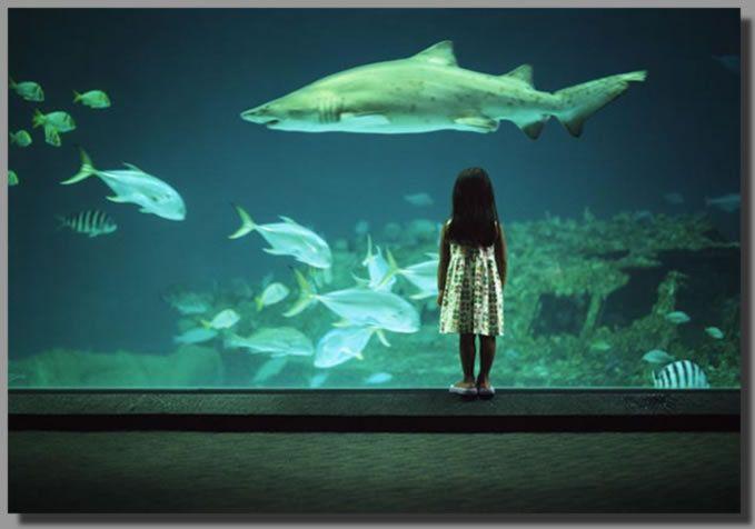 North Carolina Aquarium on Roanoke Island. Small, but some ...