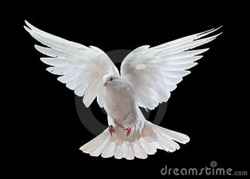 Pin By Workshop8 On Peace Garden Inspiration White Doves