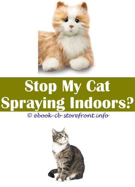 spray to stop cats peeing pets at home