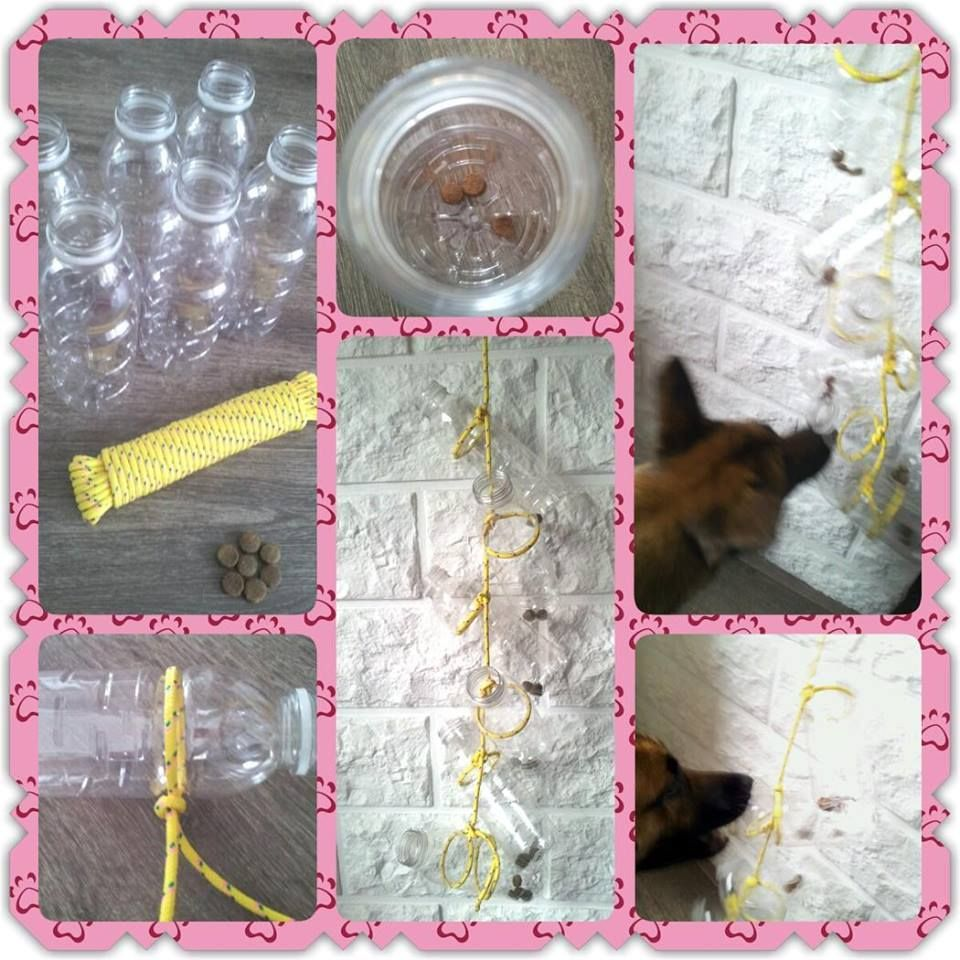 Empty Bottles Rope Fun Times For Dogs No Link Dog Treat