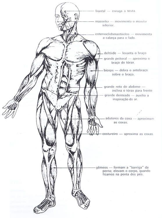 anatomia humana para colorir - Pesquisa Google | anatomía | Anatomy ...