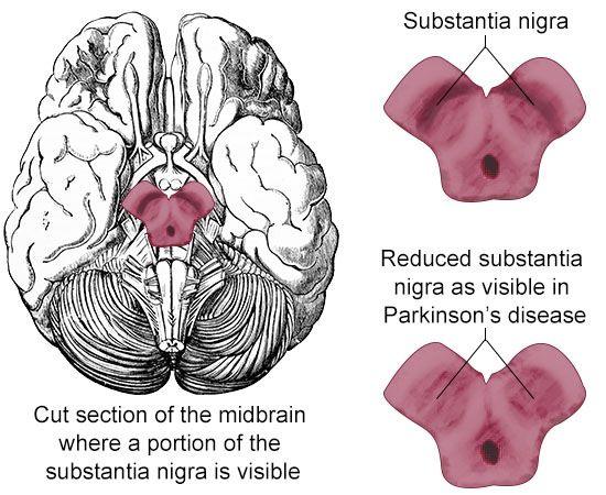 Function and Location of Substantia Nigra: A Diagrammatic ...