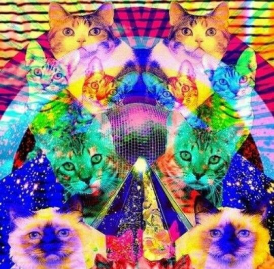 Trippy cats
