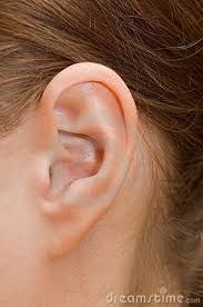 Image result for close up of human ear
