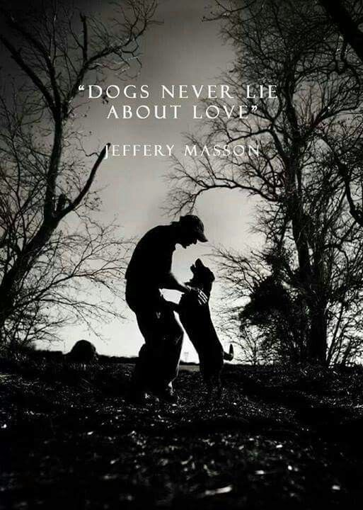 Dogs Never Lie About Love.perfect Quote For Above Dog Bed,toys Or Bowl