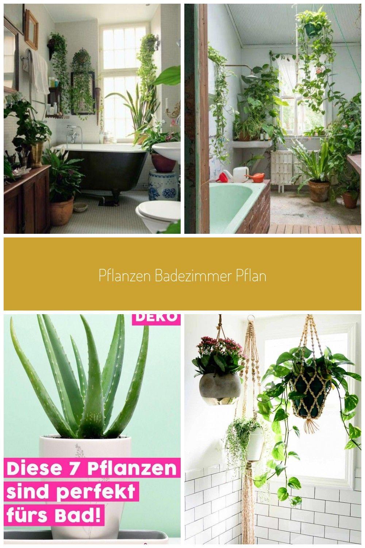 Pflanzen Badezimmer Pflanze Badezimmer Dunkel Pflanze Badezimmer Luftfeuchtigkeit Pflanze Badezimmer Ohne Fenster Pflanze Badezimmer Wenig Licht Pflanzen Ba In 2020