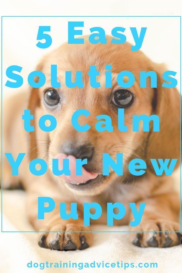 how to calm down a puppy in a crate