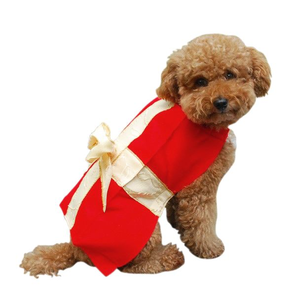 Gift Box Christmas Dog Costume | All About Violet | Pinterest ...
