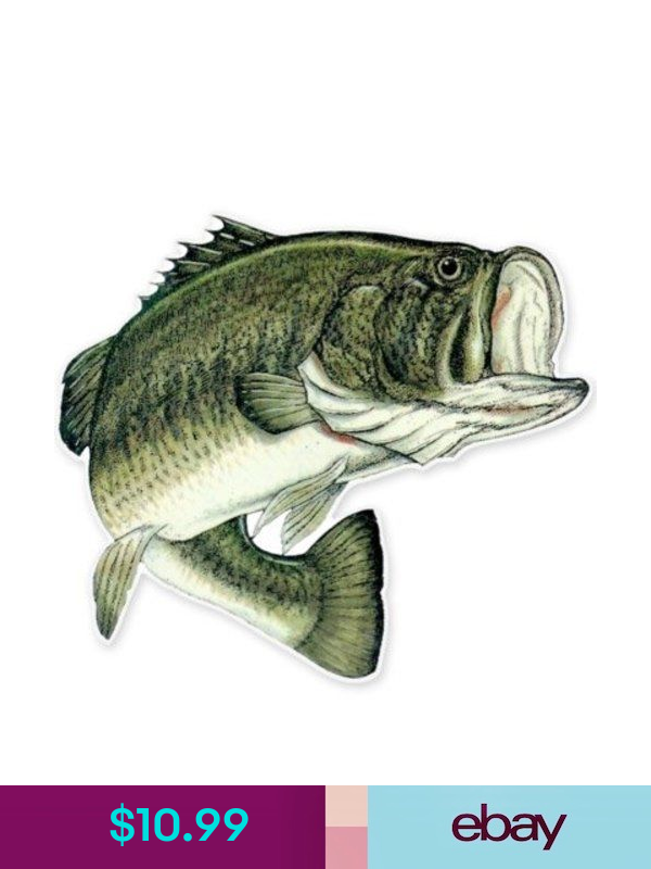 Largemouth Bass Fishing Fish Car Vinyl Sticker Select Size Fishing Decals Fish Illustration Largemouth Bass Fishing