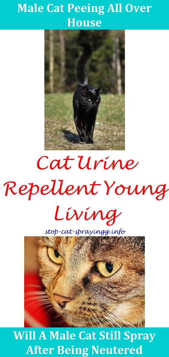 Cat Spray Natural (With images) Cat spray, Cat repellant