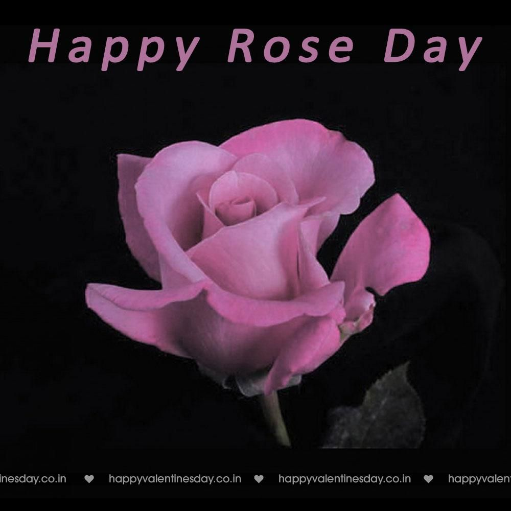 Rose Day Happy Valentines Day Meme Happy Valentines Day Greetings Happy Valentines Day Messages Happy Valentines Day Gifts Happy Valentines Day Wallpa Valentines Day Pictures Happy Valentines Day Card Valentine Quotes