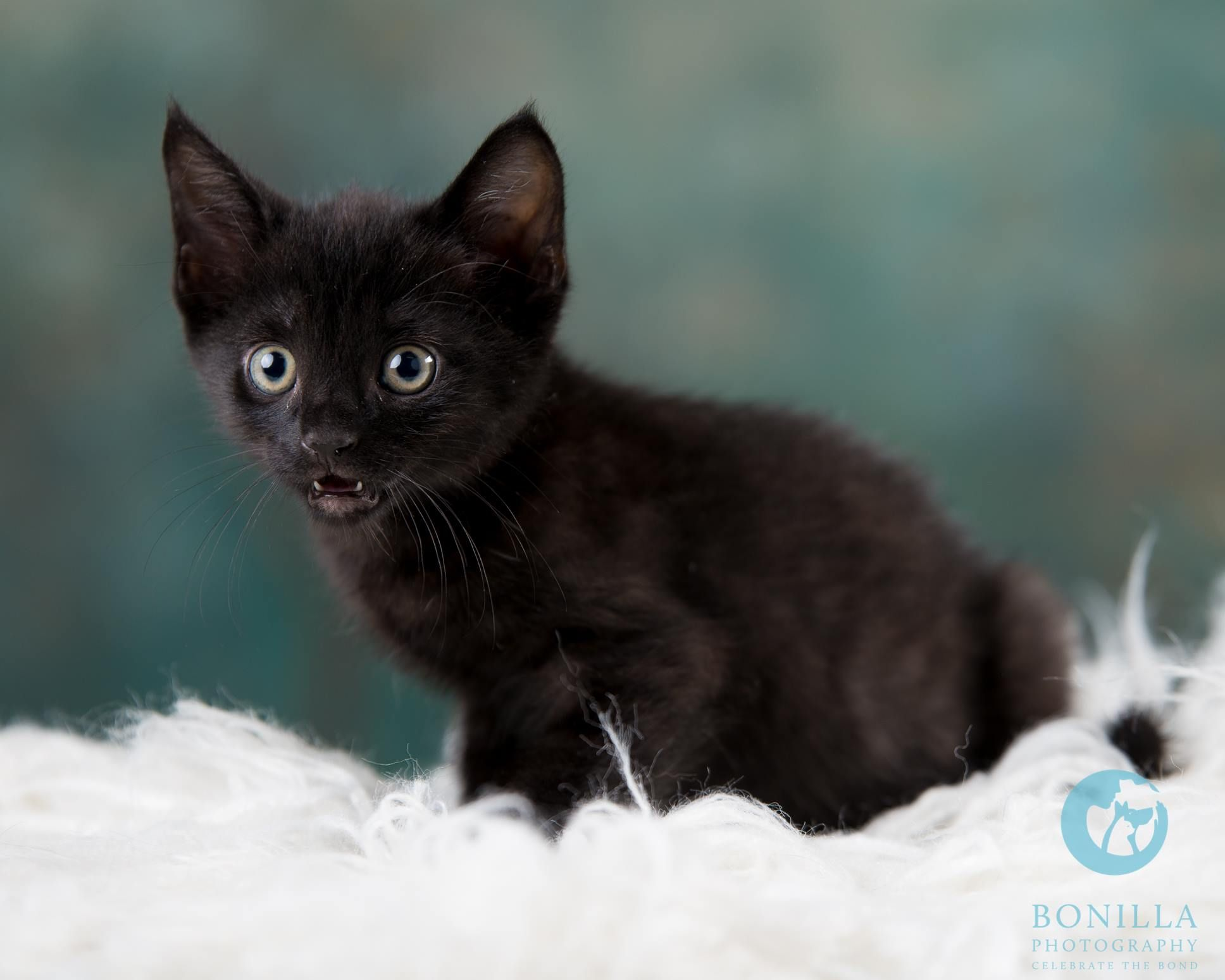I had the chance to photograph some foster kittens the