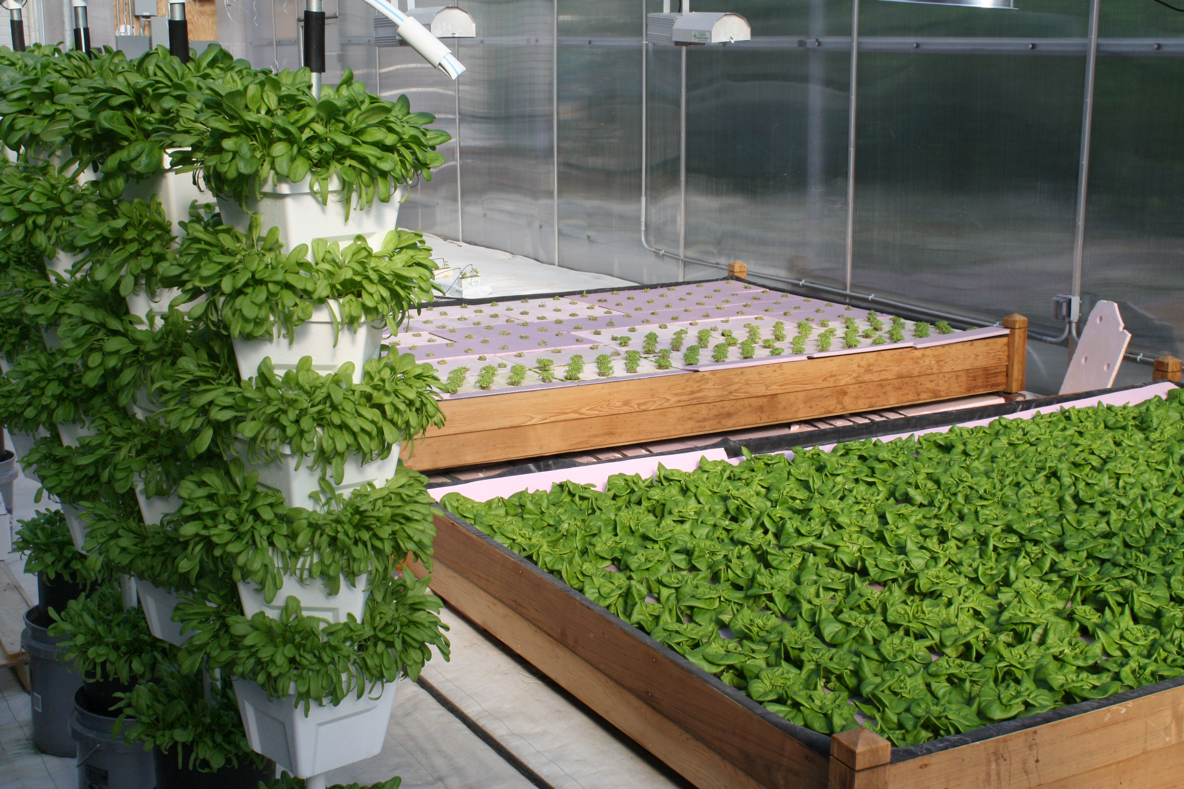 hydroponics on lettuce production Greenhouse management workshop: hydroponics february 8 & 9, 2018 oardc/osu, 1680 madison avenue strawberry production tours: oardc/osu greenhouse research.