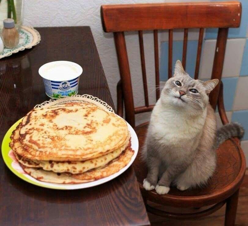 Маусленица | Смешные фото кошек, Кошачьи мемы, Смешные кошки
