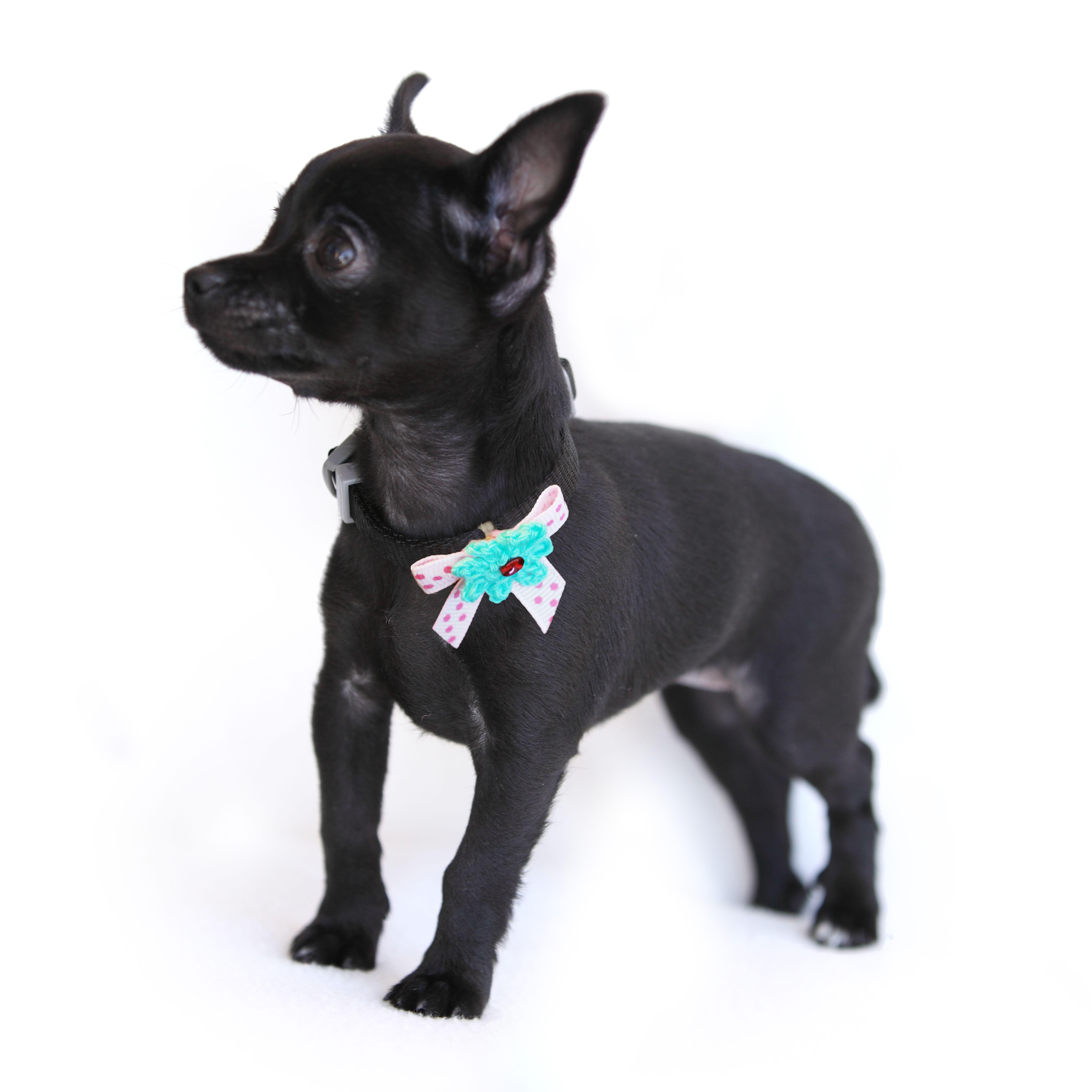 Most Inspiring Hair Bows Bow Adorable Dog - 64d44d46fb2dc2d58de5ad2db516f8a5  Pic_776959  .jpg