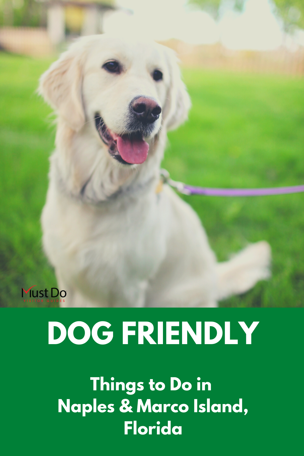 Dog Friendly Activities Naples And Marco Dog Friends Dog Care Dogs