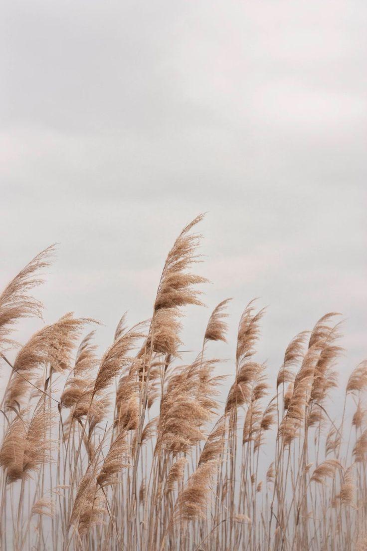 Beach Photography, Beach Grass, Wall Art, Digital Print, Instant Download, Home Decor, Postcard, Bea