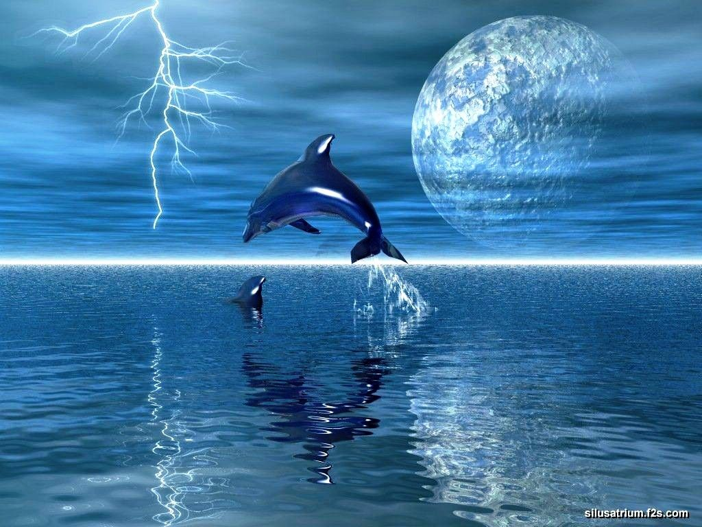 Animal Wallpaper Dolphins Wallpapers Desktop Background Very High