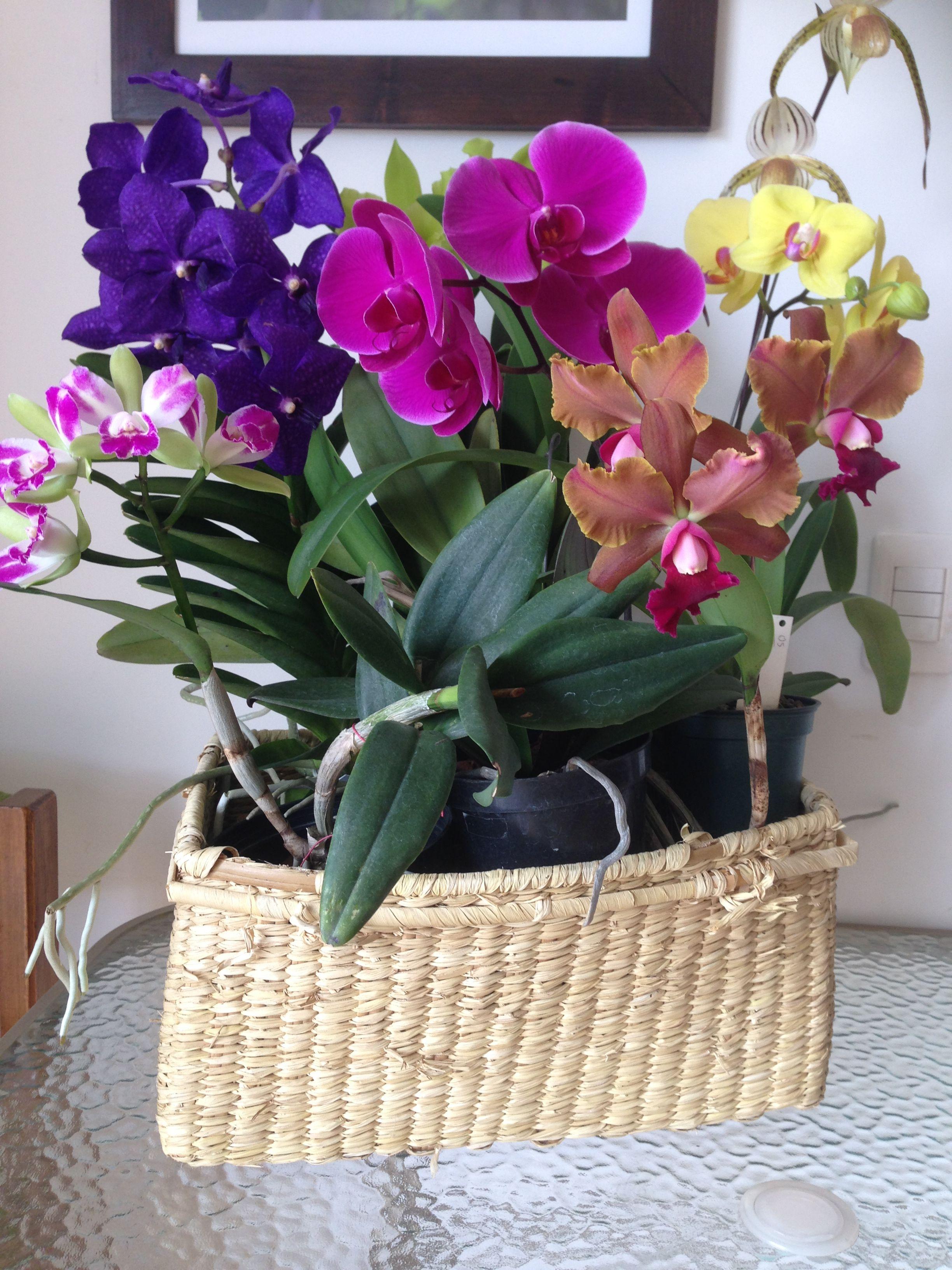 Arreglo con diferentes orquídeas | Nuestras Orquídeas, Carnívoras ...