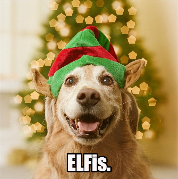 What Do You Call An Elf That Sings Christmas Dog Pets Christmas Animals