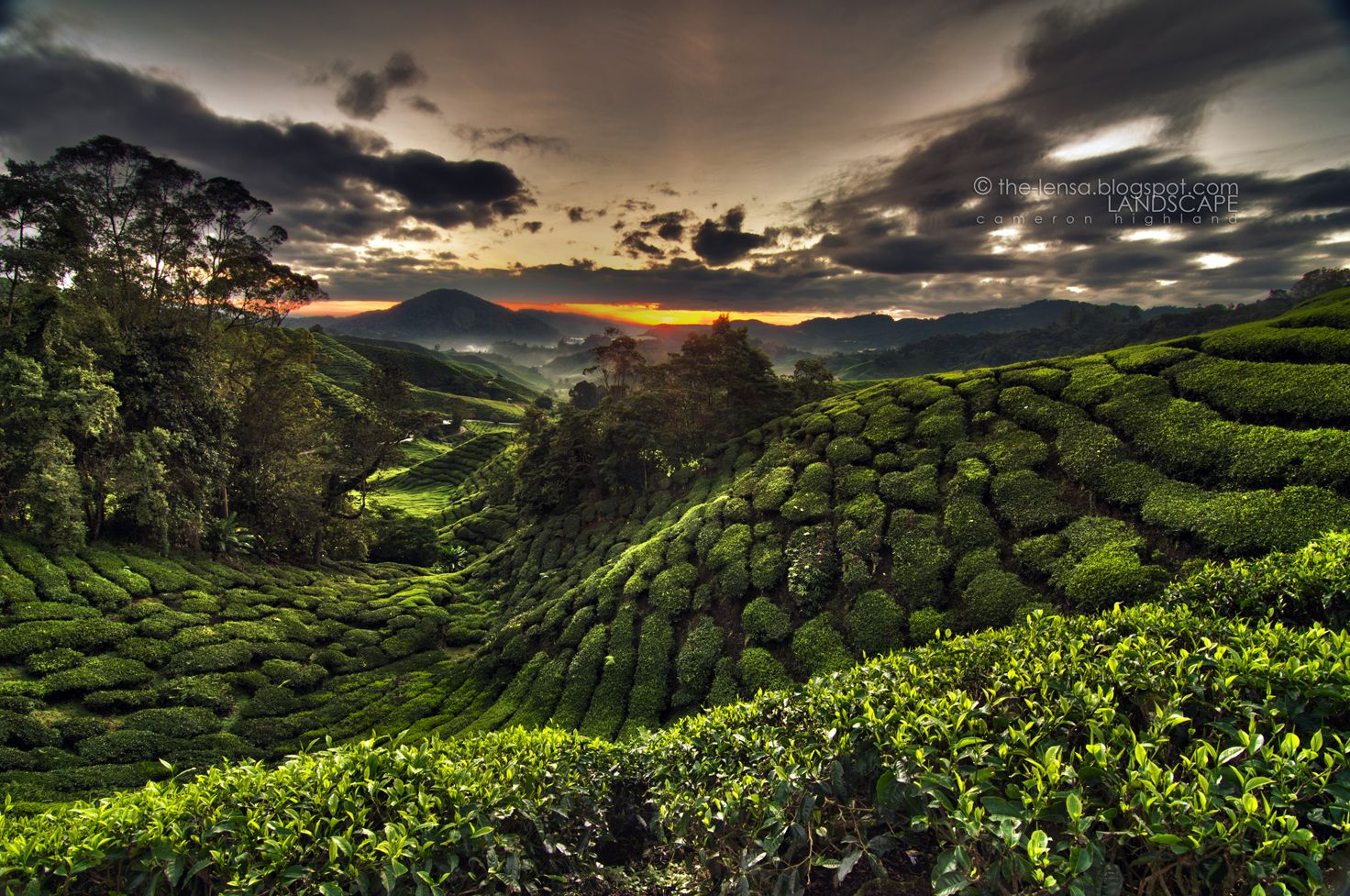 mohyiddin | LENSA photography: CAMERON HIGHLAND & MOSSY FOREST