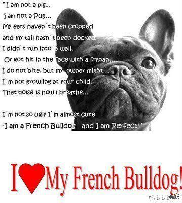 I Do Call My French Fry Piggy French Bulldog Quotes French
