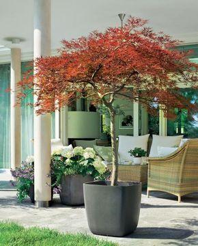 winterharte geh lze f r die k belbepflanzung garten. Black Bedroom Furniture Sets. Home Design Ideas